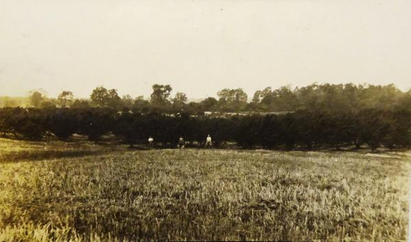 MacLeod's peach orchard.