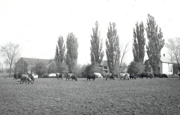 Rutherford Farm Near Leith